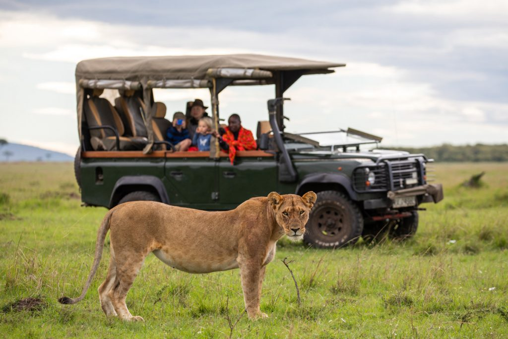 Safari watching a lionessSafari watching a lioness at House In The Wild as advertised by Kiwano Hotels